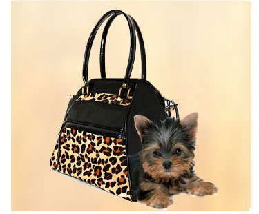 shop for dog carriers for travel and around town